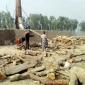 গাইবান্ধায় নিয়মনীতি উপেক্ষা করে লাইসেন্স বিহীন ইটভাটাতে পোড়ানো হচ্ছে কাঠ