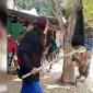 হরিনাকুন্ডুতে যুবককে গাছে ঝুলিয়ে নির্যাতনের ঘটনায় অভিযুক্ত আ'লীগ নেতাসহ গ্রেফতার-২