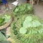 কলা আর পান ঝিনাইদহ জেলার প্রাণ