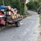বান্দরবানে আ'লীগ নেতা পরিচয়ে বন বিভাগের অনুমোদন ছাড়া সড়কের দেড় হাজার গাছ কাটছে প্রভাবশালীরা
