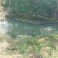 রাউজানে পোল্ট্রি ফার্ম থেকে নির্গত বর্জ্য ডাবুয়া খালে ফেলার কারণে পানি ও পরিবেশ দূষিত হচ্ছে