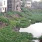 বাসিয়া নদীটি খননের ১ কোটি ৮০ লাখ টাকা ব্যয়ে খনন কাজটি পুরোটাই জলে