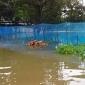 সুনামগঞ্জে বন্যায় ভেসে গেছে ৩৪২টি পুকুরের মাছ
